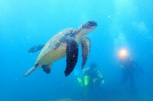今年の夏は鵜来島に遊びに行こう!