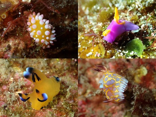海の宝石💎