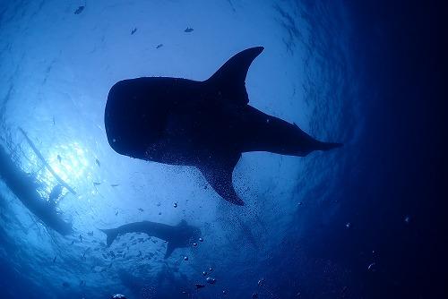 サメの秘密…!?