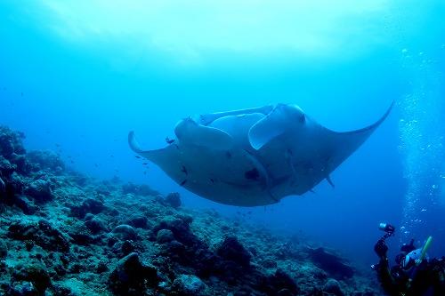 海の人気生物ランキング!
