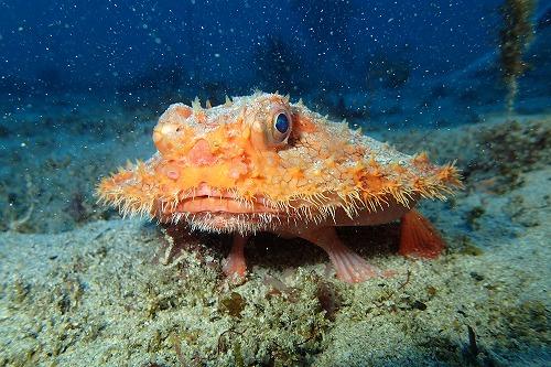 レアな深海魚!?